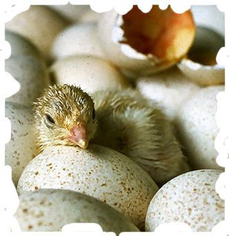 hatching2.jpg