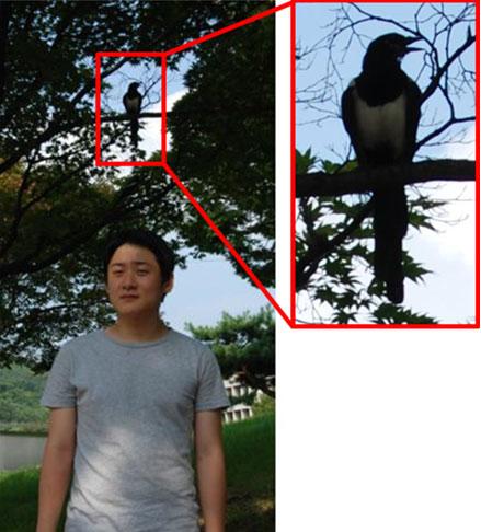 00animal_intelligence5.jpg