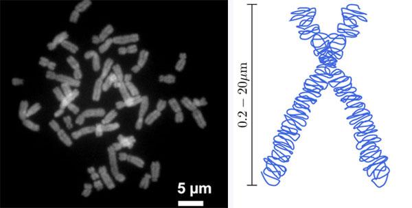 00book_life_chromosome2.jpg