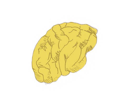 뇌일러스트