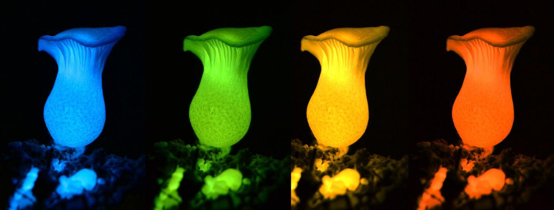 mushroomlightAAAS.jpg