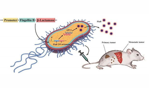 00bacteria_cancer.jpg