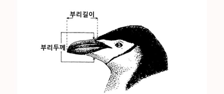 00penguin2.jpg