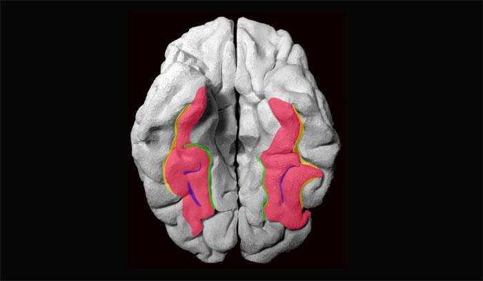 00brain_neuronStructure2.jpg