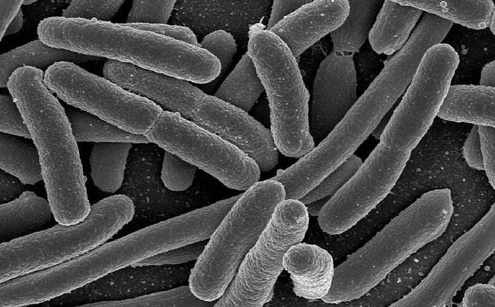 00bacteria.jpg