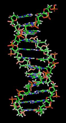 1_DNA모형_위키