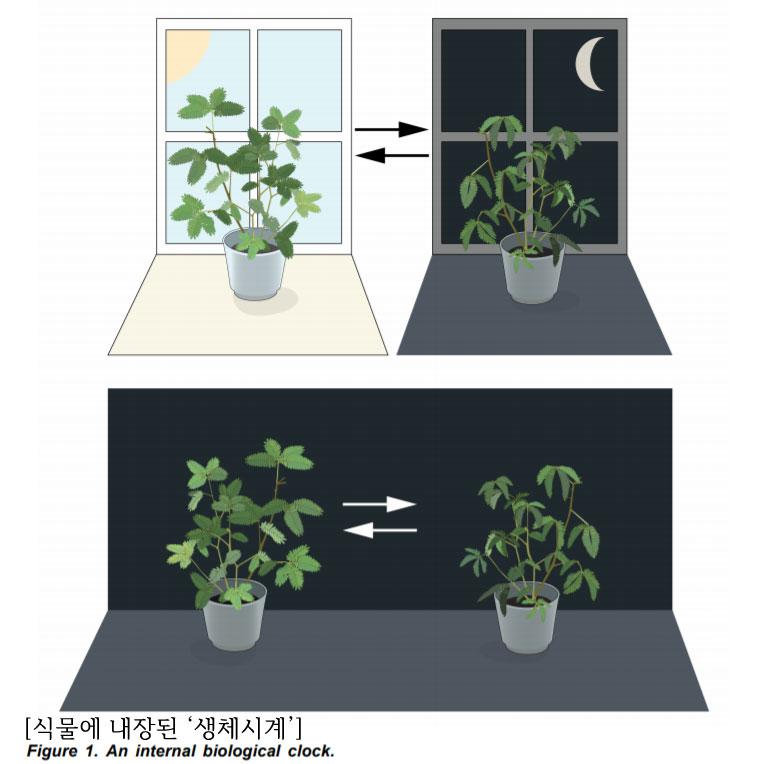 plantclock.jpg