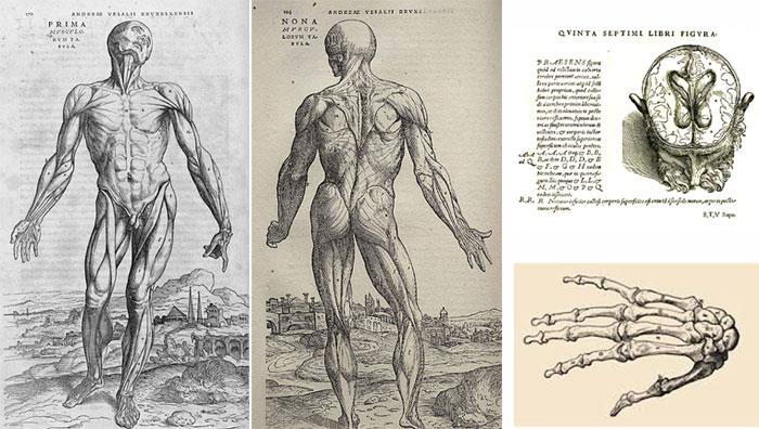anatomy2_Vesalius.jpg