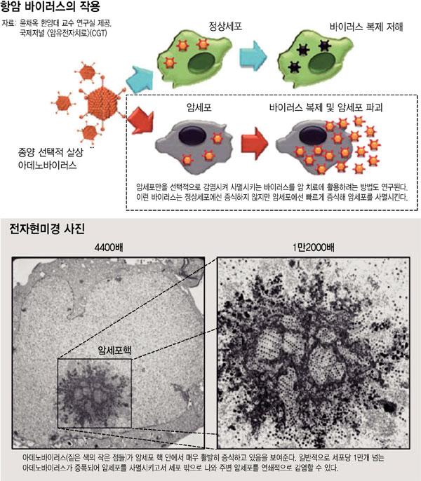 00humanvirus1.jpg