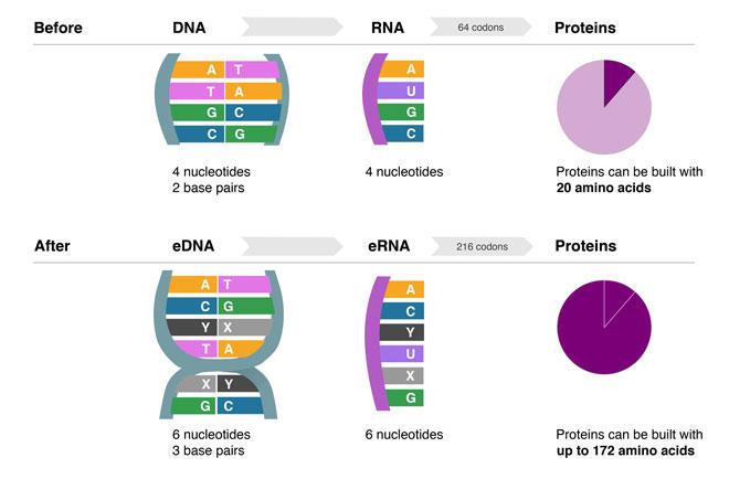 002014_DNA.jpg