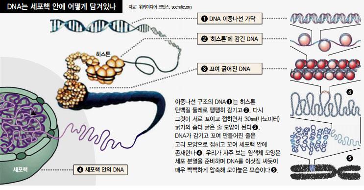 00DNA3D1.jpg
