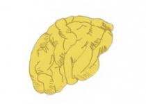[리뷰] 뇌와 마음의 과학에 던져진 큰 물음 두 가지