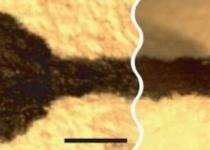 [뉴스] 글씨의 물리학: 펜과 종이 모세관의 잉크 줄다리기