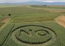 [특집] GMO 미래: 먹을거리의 행복은? -황선옥 이사