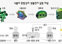 [뉴스] 다시마·미역에서 생물전지 '깜빡깜빡'