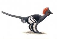 [심층] 새야? 공룡이야?..'깃털공룡' 화석들이 남긴 쟁점들