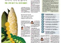 [GMO결산] 아줌마들, GMO를 '수다의 식탁'에 올리다