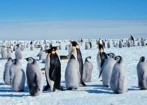 [뉴스] 남극 펭귄들이 어둠을 싫어하는 까닭은?