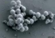 [뉴스] '합성게놈' 통째로 이식, 박테리아 종을 바꾸다