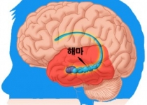 [뉴스] 알뜰한 뉴런? 세포사멸 효소가 기억활동에도 쓰여