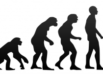 [뉴스] '인류 진화'의 역사서술을 바꿀만한 최근 연구들