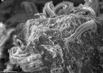 [수첩] '운석의 외계생명체 증거' 논란, 1996년과 2011년